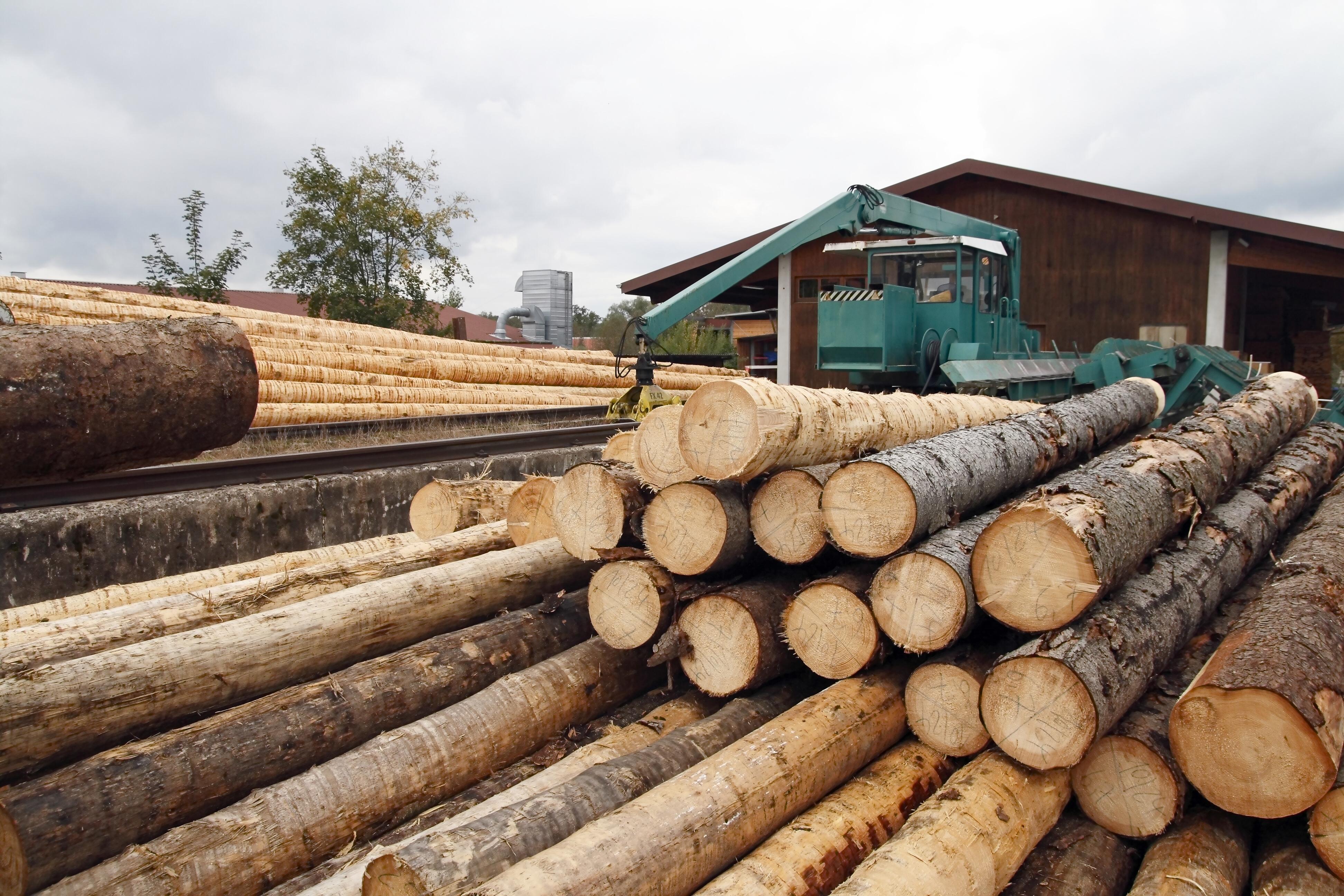 El gobierno aprueba un real decreto para asegurar la for La beta de la madera
