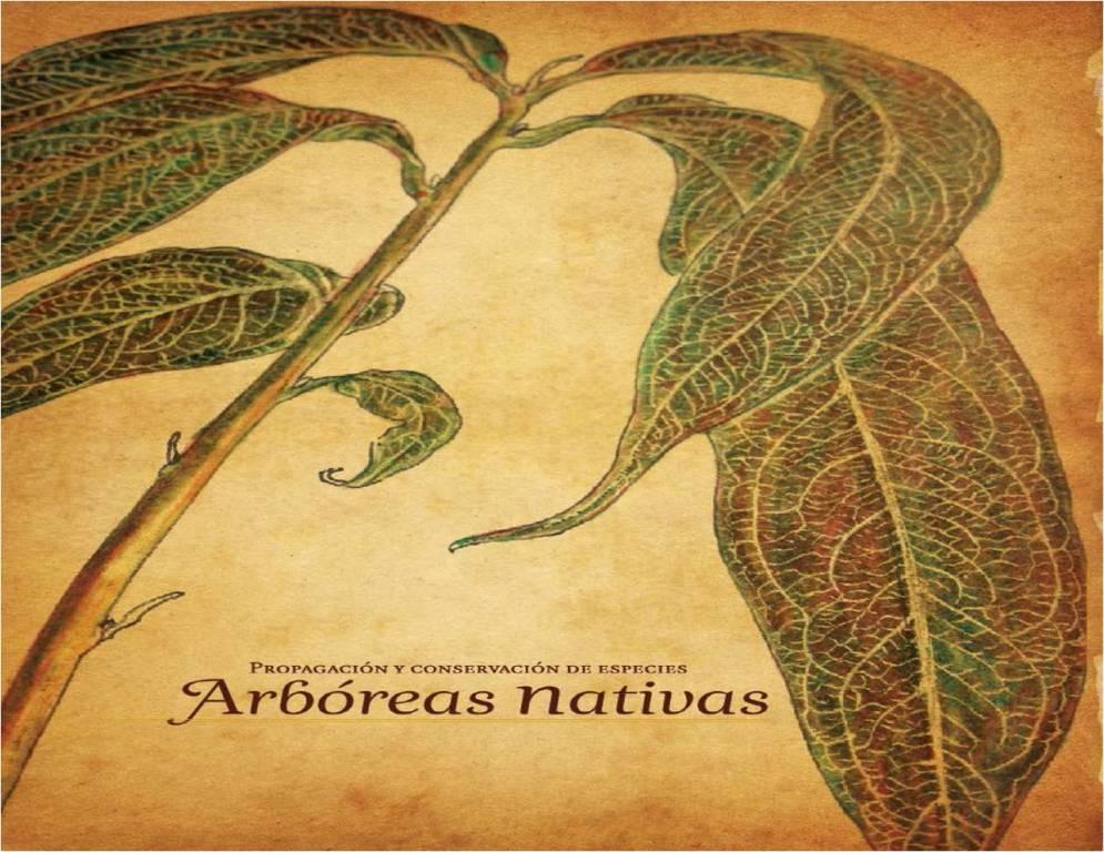 Propagaci n y conservaci n de especies arb reas nativas for Importancia economica ecologica y ambiental de los viveros forestales