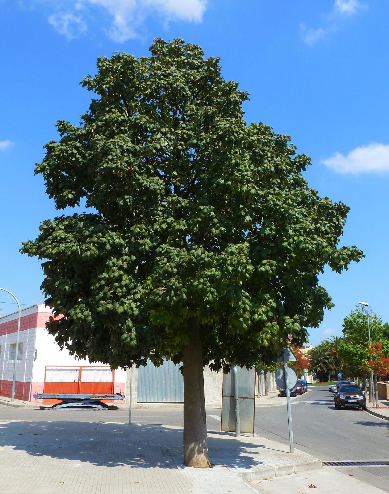 Los rboles pueden cambiar el clima de la ciudad Forestal Maderero