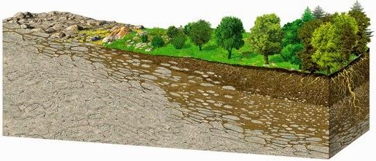 Los suelos constituyen la base de la vegetaci n forestal maderero - Cojines gigantes para el suelo ...