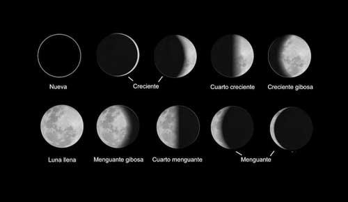 Cultivar teniendo en cuenta las fases de la luna - Forestal Maderero ~