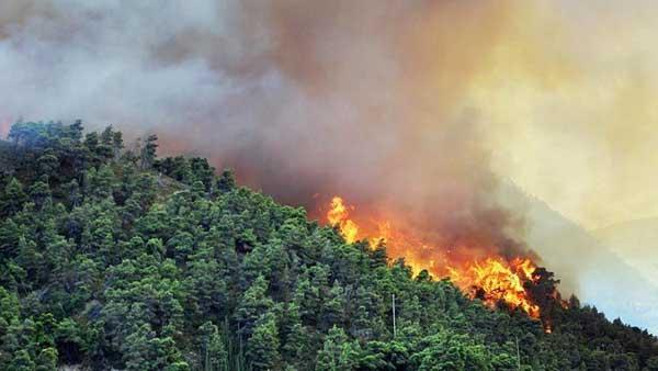 Inflamabilidad de las plantas e incendios forestales for Tipos de plantas forestales