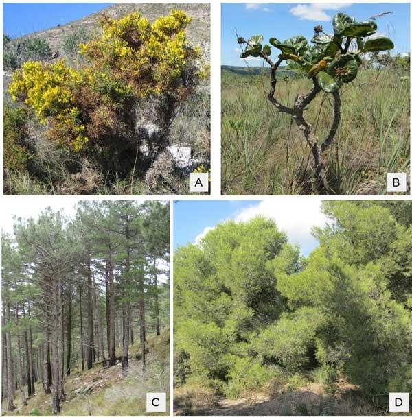 Inflamabilidad de las plantas e incendios forestales for Plantas forestales