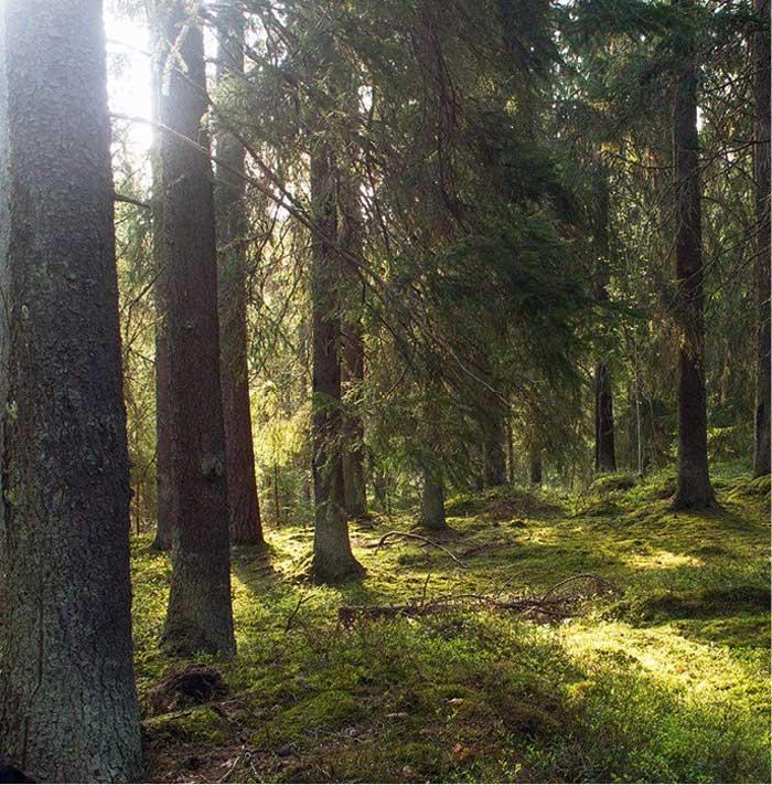 Pinera en Suecia
